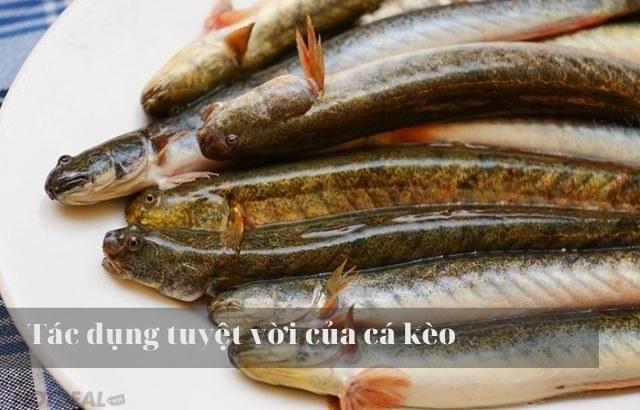 Lẩu cá kèo sống